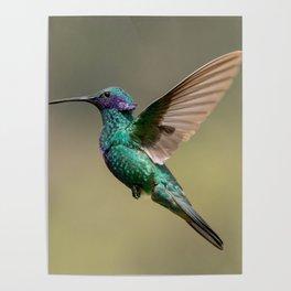 Violetear Hummingbird Profile Poster
