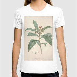 mespilus japonica Redoute Roses 3 T-shirt