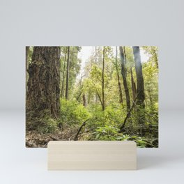 Schrader Old Growth Forest Mini Art Print