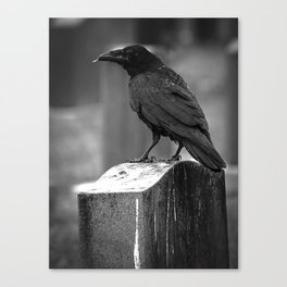 Found A Feather Canvas Print