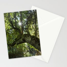 Beautiful Trees / 4 Stationery Cards