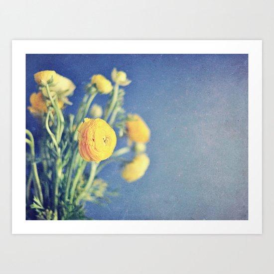 Ranunculus (on Blue) Art Print