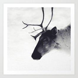 Caribou Portrait II Art Print