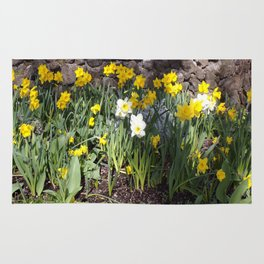 Yellow and White Daffodils Against a Rock Wall Rug