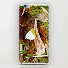 Cabbage White Butterfly iPhone & iPod Skin