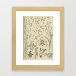 Flower Anatomy Framed Art Print