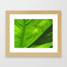 Tropical Green Framed Art Print