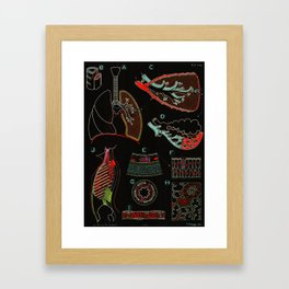 Paul Sougy: The Human Lung, 1957 (proceeds benefit The Nature Conservancy) Framed Art Print