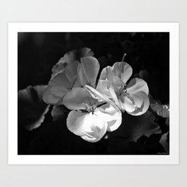 its petals Art Print