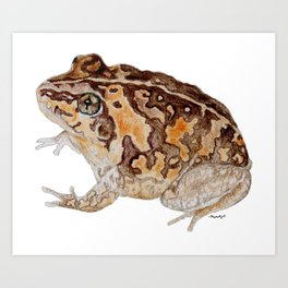 Plump Little Froggy Art Print