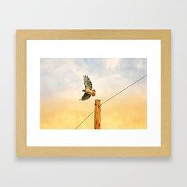 Hawk Flight Decor. Framed Art Print