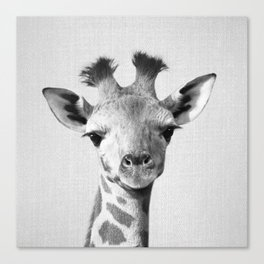 Baby Giraffe - Black & White Canvas Print