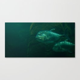giant trevally  Canvas Print