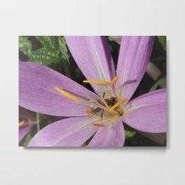 Bee in the purple flower Metal Print
