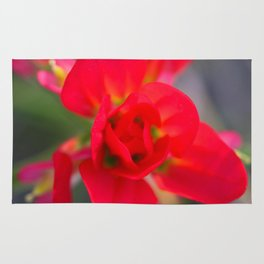 Springtime Paintbrush Wildflower Rug