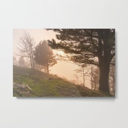 Golden atmosphere in fog Metal Print