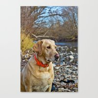 lab Canvas Prints featuring Lab by Todd Allman