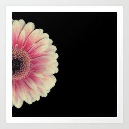 colored summer ~ pink and black gerbera Art Print