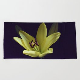 Asiatic Yellow Lily Beach Towel