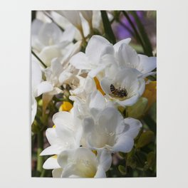 Bee on its back Poster