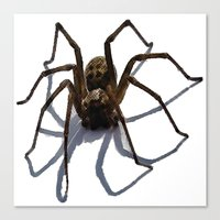spider Canvas Prints featuring SPIDER by aztosaha