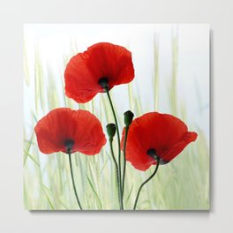 Poppies red 008 Metal Print