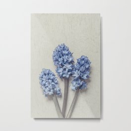 Light Blue Hyacinths Metal Print