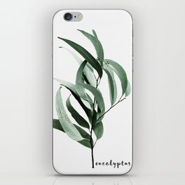 Eucalyptus - Australian gum tree iPhone Skin