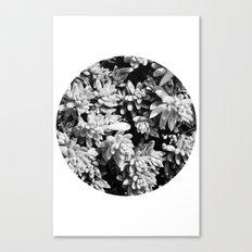 Succulent circle Canvas Print