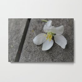 Fallen Apple Tree Blossom Metal Print