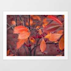 Fall Berries Art Print