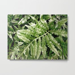 Lush Ferns Metal Print