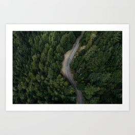 NATURE - PHOTOGRAPHY - FOREST - HIGHWAY - ROAD - TRIP - TREES Art Print