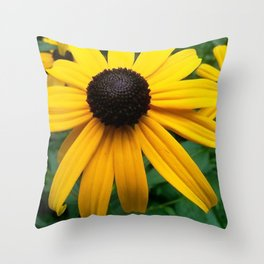 Black Eyed Susan 2 Throw Pillow