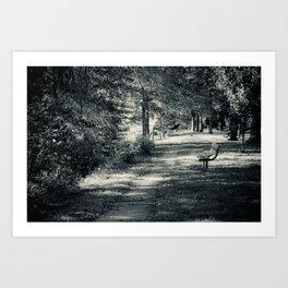 Muskingum Path Art Print