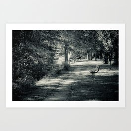 Muskingum Path Art Print