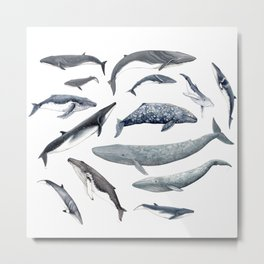 Whales all around Metal Print
