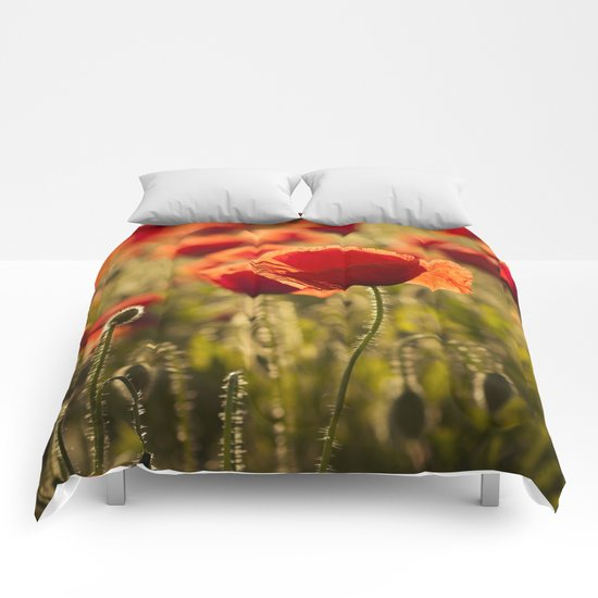Poppies in LOVE - Poppy Flower Flowers Comforters