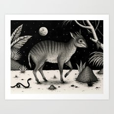Zebra Duiker Art Print