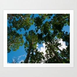 Birch Trees in the Sky  Art Print