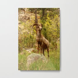 His Teritory Metal Print