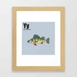 Yellow Perch Framed Art Print