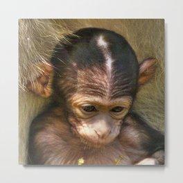 Sweet Baby Monkey Metal Print