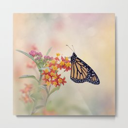 Monarch Butterfly  feeding on Tropical milkweed Metal Print