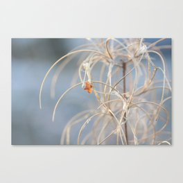 willowherb in winter Canvas Print