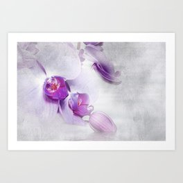 Colurful Orchid 2 Art Print
