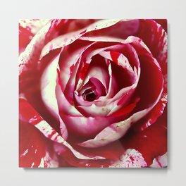 Vintage rose 8 Metal Print