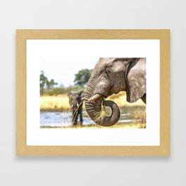 Elephant Eating Grass Framed Art Print