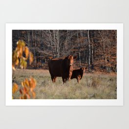 Mom Cow and calf Art Print