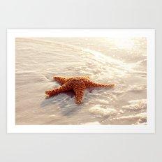 Sugar Starfish I Art Print